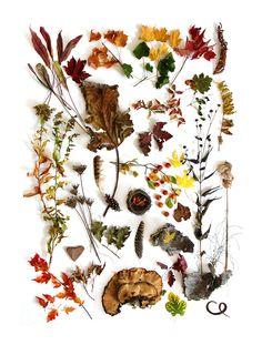erbe d'autunno-2